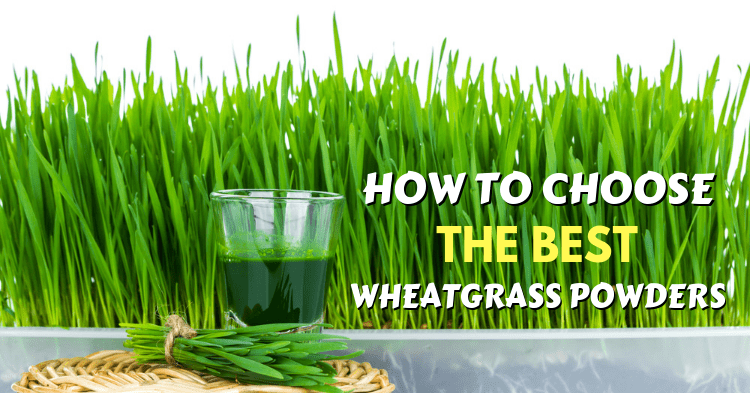 the best wheatgrass powders