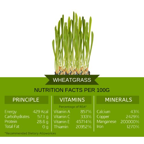 wheatgrass nutritional info 100g